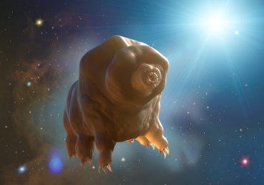 tardígrados en el espacio