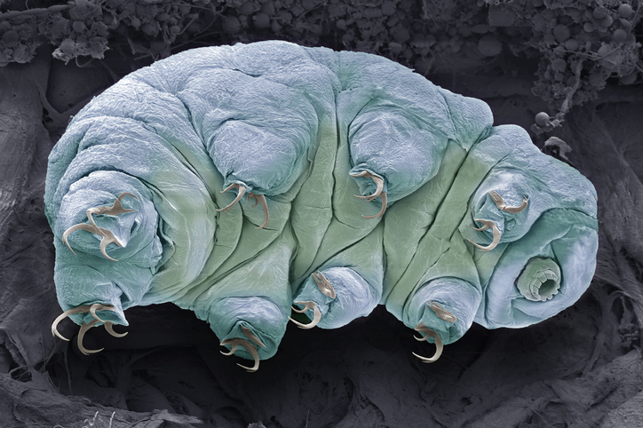 tardígrados extremófilos