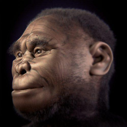 Nueva especie humana