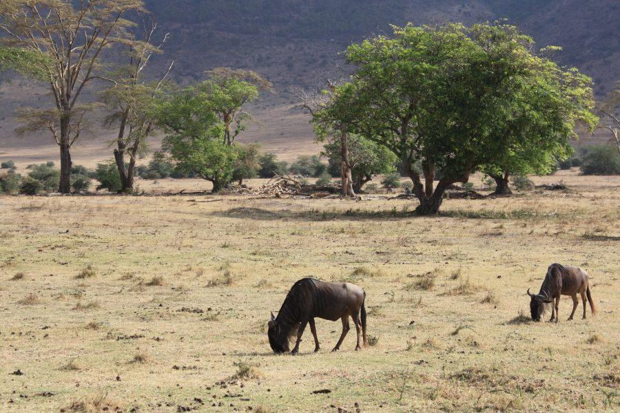ecosistema protegido