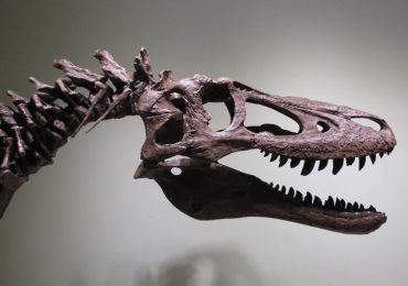 bebé T-rex
