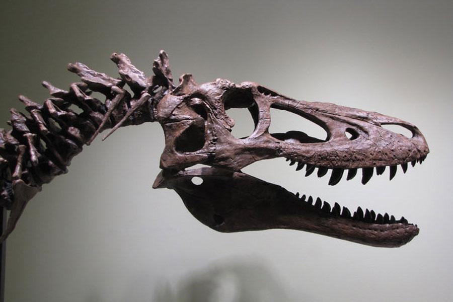 Resultado de imagen de t rex