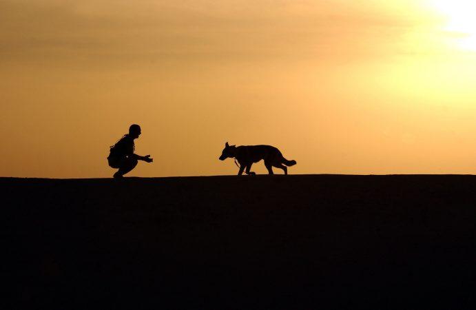 Dueños de perros