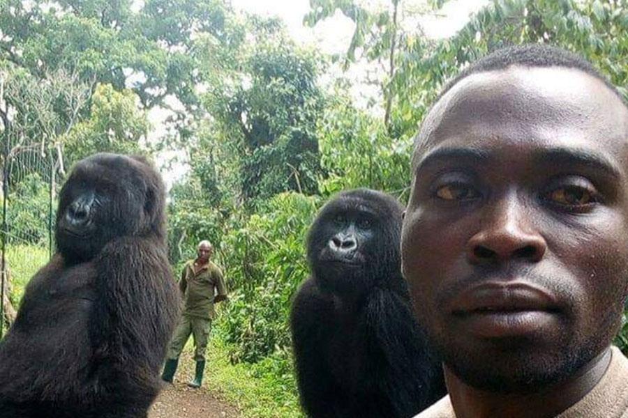 6a977c638f84 La selfie con gorilas que le da la vuelta al mundo