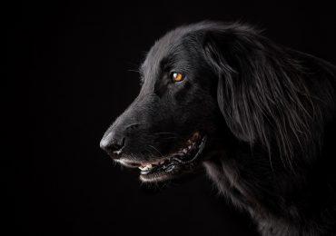 perros sonríen