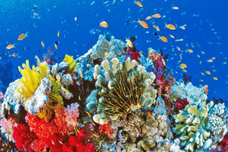 súper corales