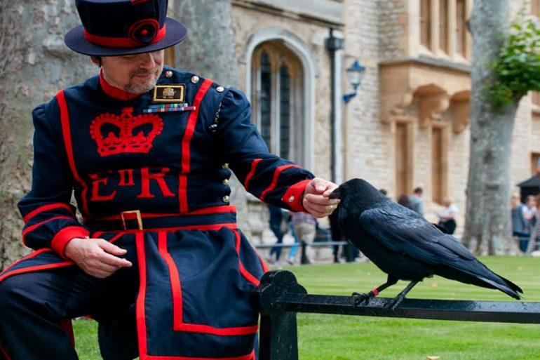 cuervos custodian la Torre de Londres