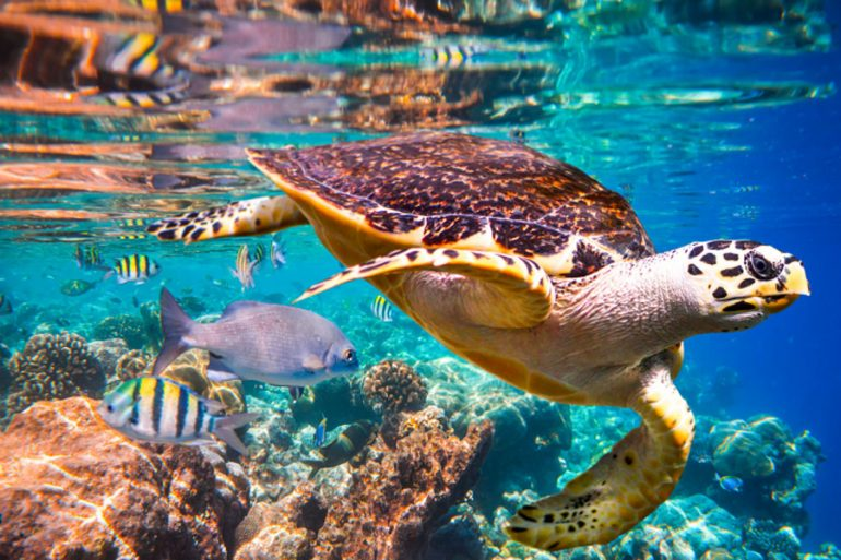 informe especies peligro de extinción