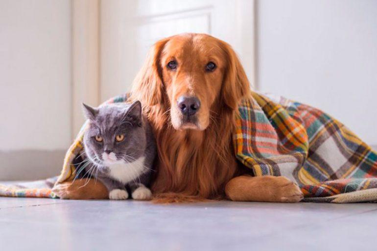 mascotas contingencia ambiental