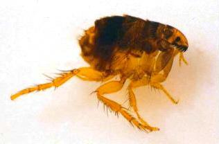 insectos enfermedades
