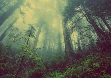 extinción de plantas