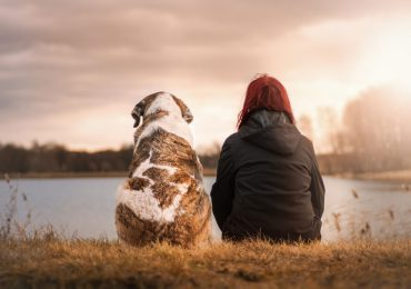 perros reflejan el estrés