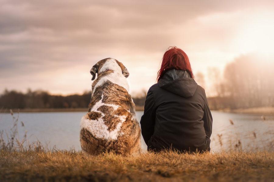 perros-reflejan-el-estre%CC%81s