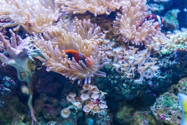antibióticos al océano