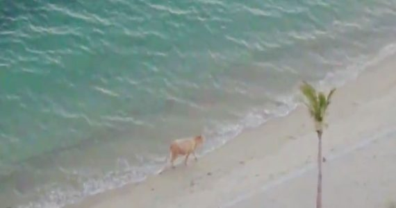 vaca playa