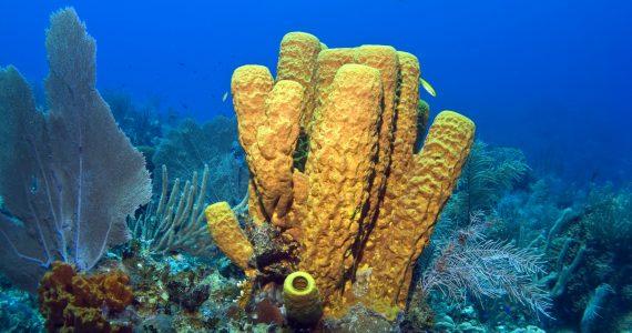 moléculas de esponjas marinas