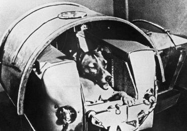 animales en el espacio