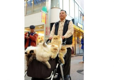 gatos carriola