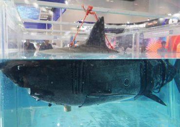 drones tiburón