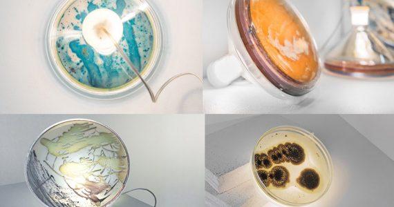 lámparas bacterias