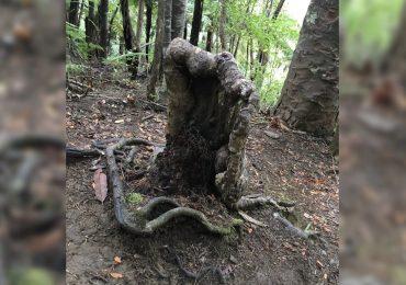 árbol vampiro