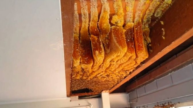 60 mil abejas