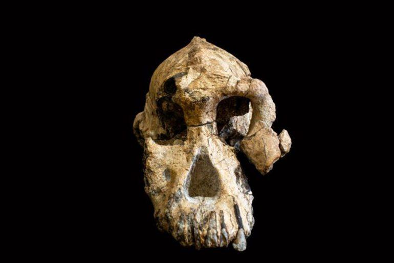 cráneo de casi