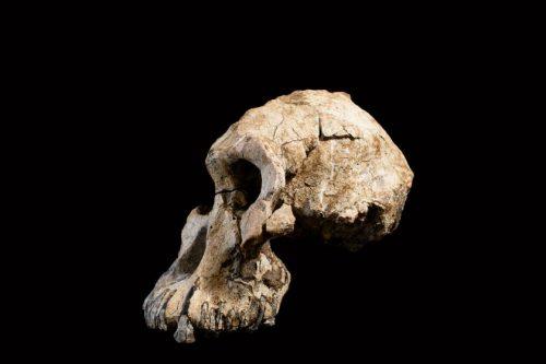 cráneo de casi 3.8 millones