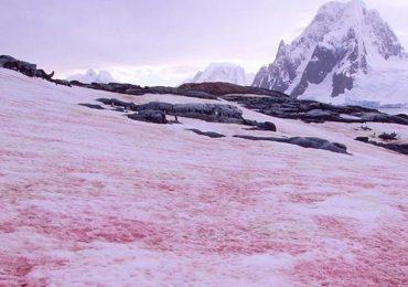 nieve color sandía