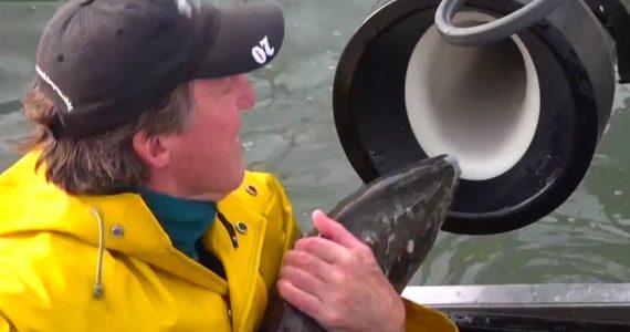 cañón para peces