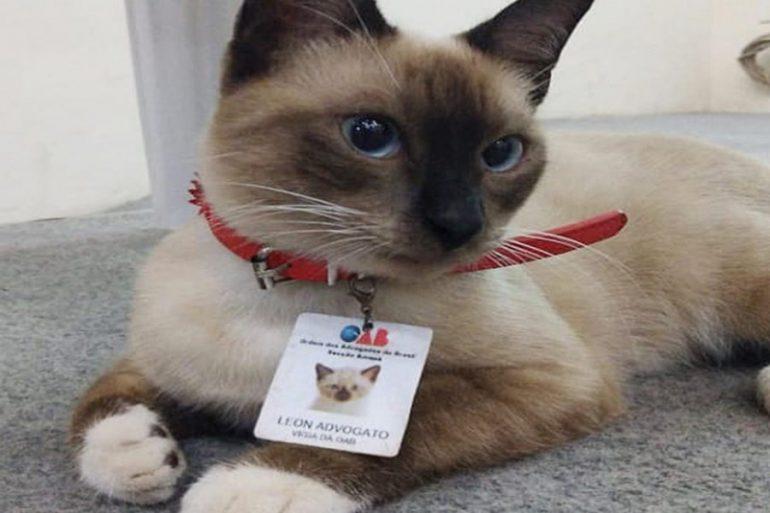 gato recepcionista