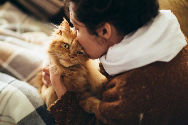 gatos dueños