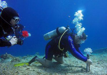 corales impresos en 3D