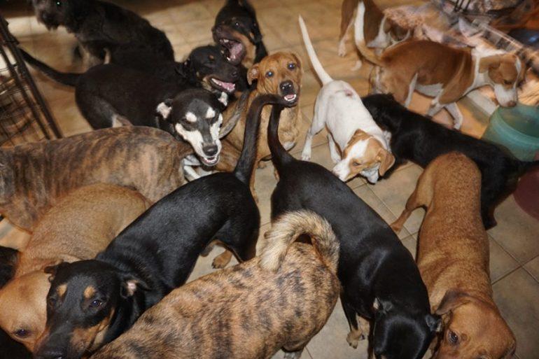 refugio a 97 perros