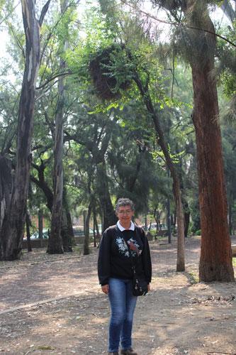 Perico monje argentino