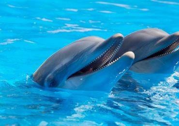 evolucionaron los delfines