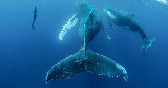 forenses de ballenas