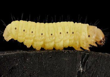 gusano plástico
