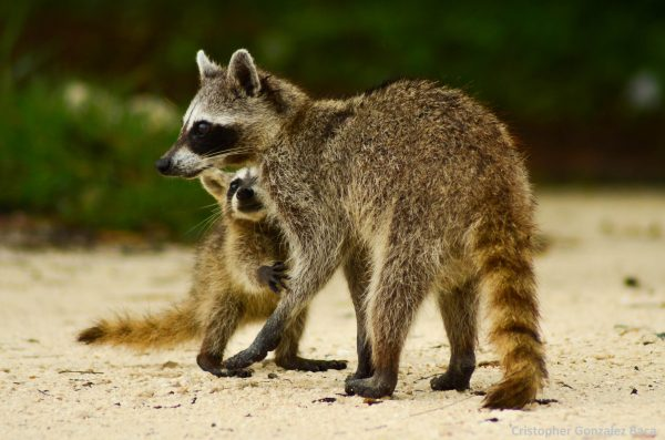 especies endémicas