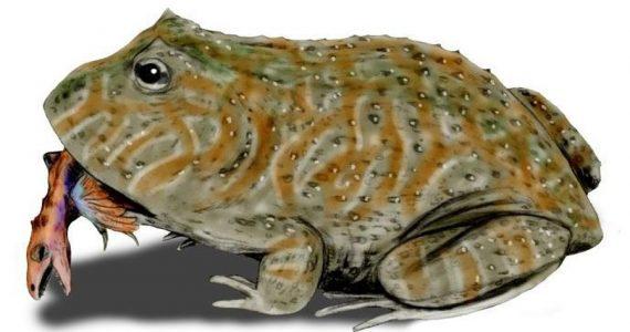 rana antigua