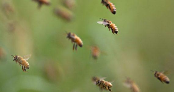 ley de protección de las abejas