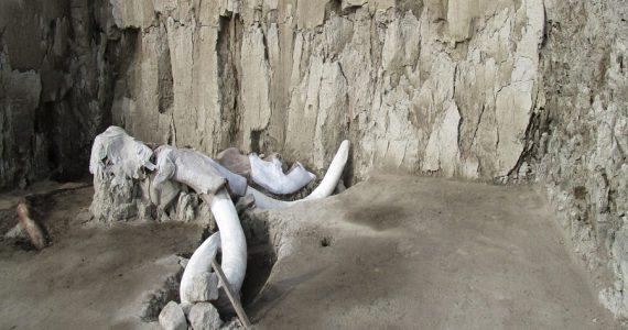 restos de Mamut