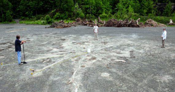 bosque fosilizado