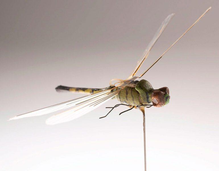 libélula espía