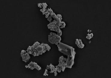 microorganismo