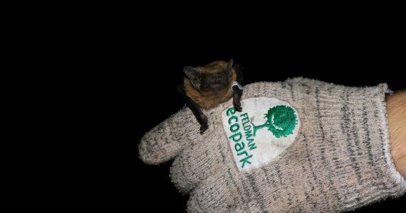 murciélagos en rehabilitación
