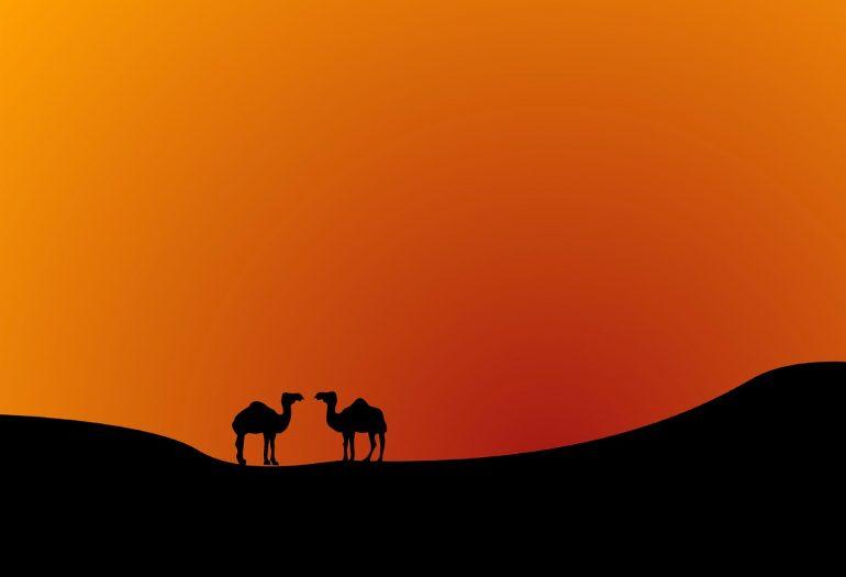 miles de camellos