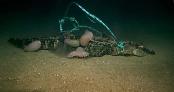 Cocodrilos en el fondo del mar