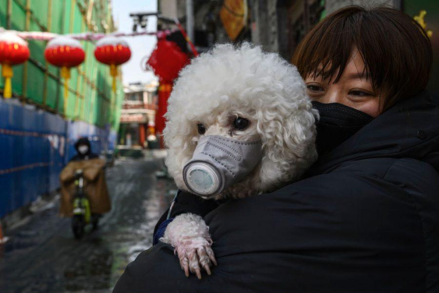 Resultado de imagen de perro covid hong kong