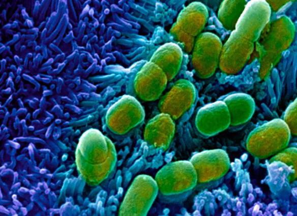 Antibiótico
